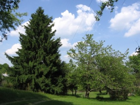 222_Tract A - Homeplace (3)_large
