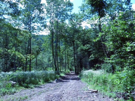 Lick Creek Forest-006