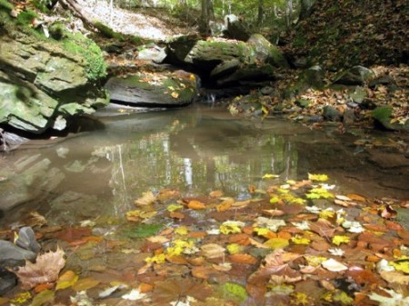 05-RED SPRINGS FOREST 62-004