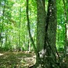 GREENBRIER PINES LOT 15A TOUR RESIZE (10)