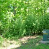GREENBRIER PINES LOT 15A TOUR RESIZE (3)