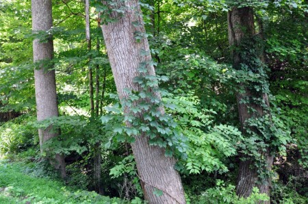 Falling Springs Forest Tour 011