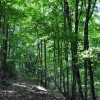 Falling Springs Forest Tour 012