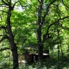 Falling Springs Forest Tour 017
