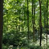 Falling Springs Forest Tour 029