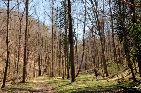 Georges Creek Forest  (3)