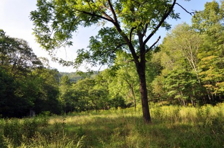 griffith-creek-forest-tour-003