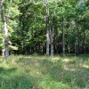 griffith-creek-forest-tour-005