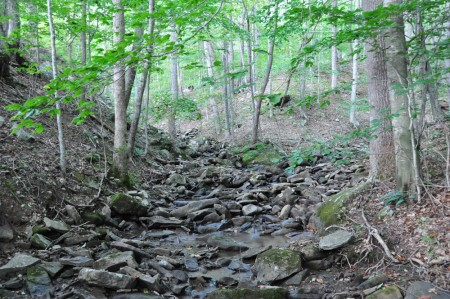 griffith-creek-forest-tour-007