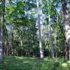 griffith-creek-forest-tour-009