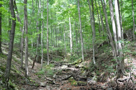 griffith-creek-forest-tour-011