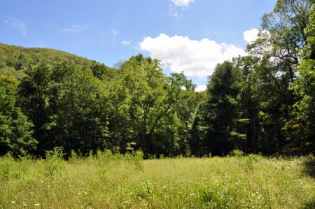 griffith-creek-forest-tour-038