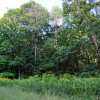 griffith-creek-forest-tour-057