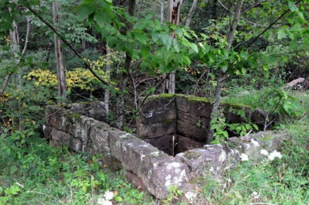 griffith-creek-forest-tour-058