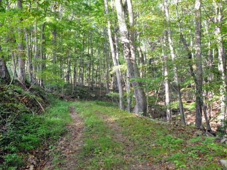 griffith-creek-forest-tour-065