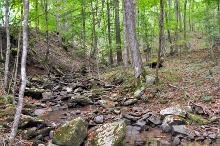 griffith-creek-forest-tour-067