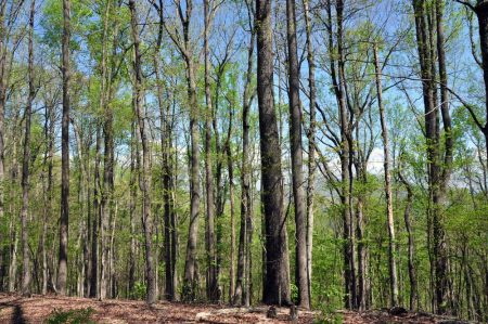 Cape Reed Forest 023