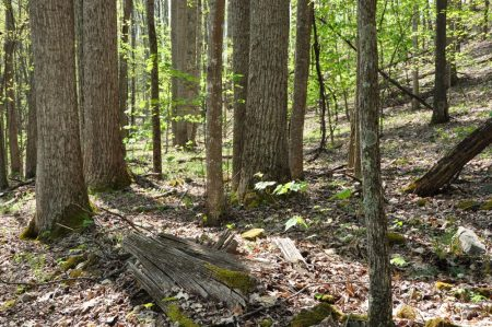 Cape Reed Forest 028