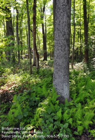 Bridgeview Estates Lot 26 Fayetteville WV 5