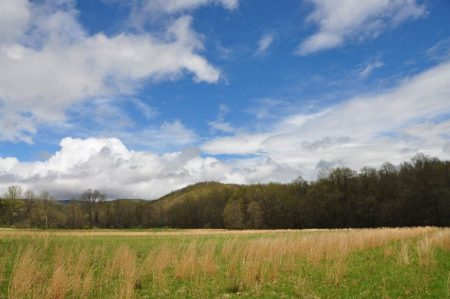 Otter Creek Farm and Forest Tour 003