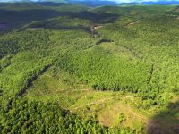 SEWELL MOUNTAIN FOREST </br> 269 ACRES