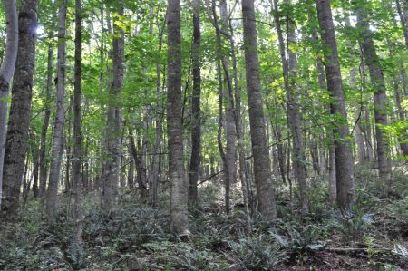 Berthy Forest 017