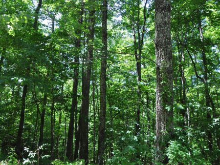 Berthy Forest 022