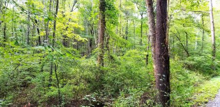 Piney Branch Forest 002