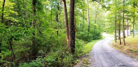 Piney Branch Forest 005