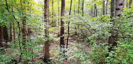 Piney Branch Forest 006