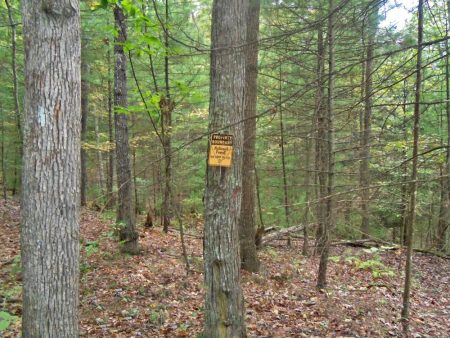 Anderson Forest Tour 010
