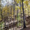 Big Buck Forest and Homeplace 007