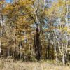 Big Buck Forest and Homeplace 008