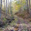 Big Buck Forest and Homeplace 016