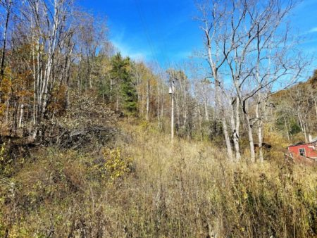 Big Buck Forest and Homeplace 023