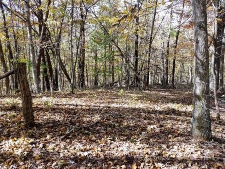 Big Buck Forest and Homeplace 026