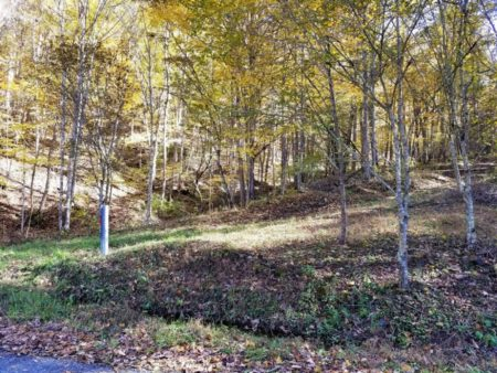 Big Buck Forest and Homeplace 027