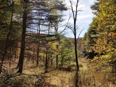 Big Buck Forest and Homeplace 028