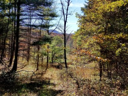 Big Buck Forest and Homeplace 033