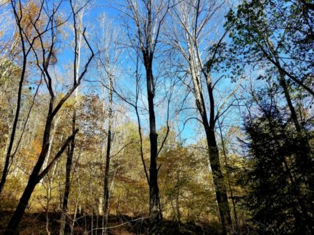 Big Buck Forest and Homeplace 051