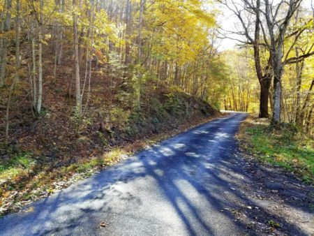 Big Buck Forest and Homeplace 055