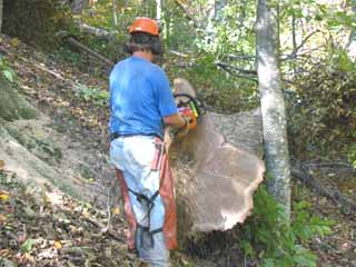 Timber cutters take pride in their work and slicks her up