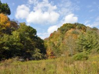 URBAN FOREST - 127 +/- ACRES