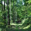 02-RED SPRINGS FOREST 62-001