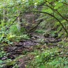04-RED SPRINGS FOREST 62-003