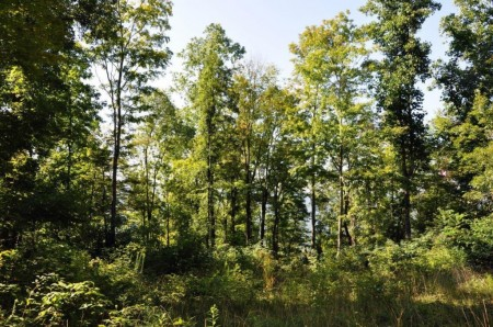 10-RED SPRINGS FOREST 62-009