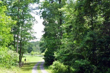 Brumfield Forest Tour 004