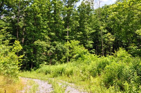 Brumfield Forest Tour 009