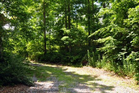 Brumfield Forest Tour 011