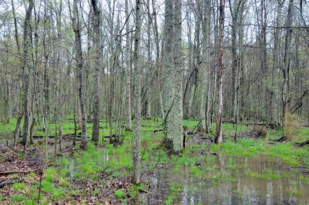 Otter Creek Farm and Forest Tour 005